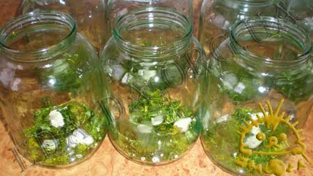 Кулинарные рецепты с фото - Соленые огурцы, Фото 1